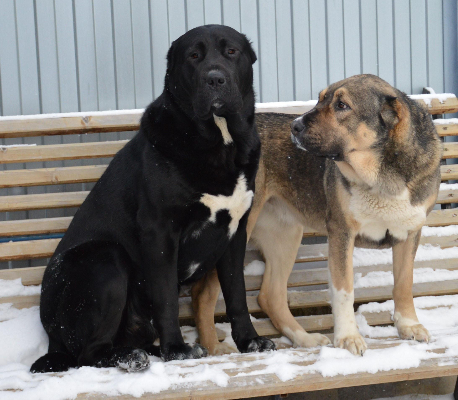 Собаки питомника